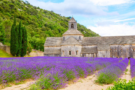 Abbey of Senanque and blooming rows lavender flowers. Gordes, Luberon, Vaucluse, Provence, France, Europe. Zdjęcie Seryjne