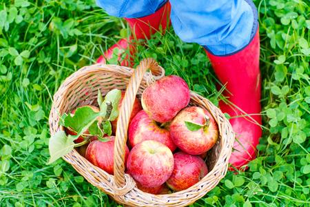 Die Beine des Kindes in gelb regen Stiefel und rote Äpfel