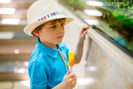 작은 꼬마 소년 존경 다른 파충류와 물고기 수족관에 스톡 콘텐츠