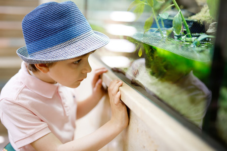 Little kid boy admire different reptiles and fishes in aquarium