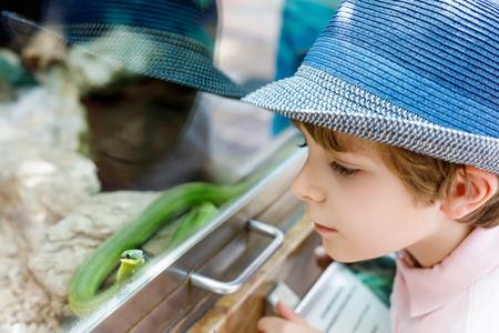 꼬마 소년 존경 테라리움에 유독 한 녹색 뱀 스톡 콘텐츠