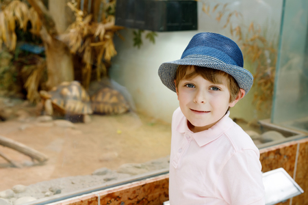 Little kid boy admire big turtles in terrarium