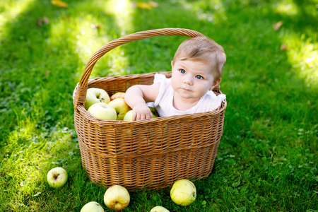 Cute baby girl sitting in basket full with ripe apples on a farm in early autumn.
