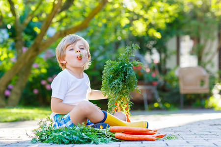 Adorable little kid boy with carrots in domestic garden