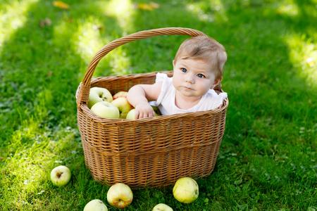 Leuk baby meisje zit in mand vol met rijpe appels op een boerderij in het vroege herfst.