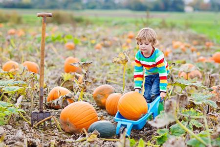 Adorable little kid boy picking pumpkins on Halloween pumpkin patch.