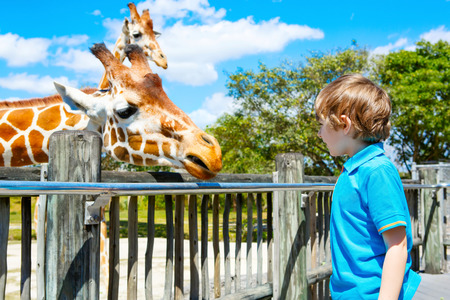 動物園でキリンを見て、食べる小さな子供の少年 写真素材