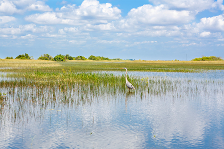 Florida wetland, Airboat ride at Everglades National Park in USA. Stock Photo - 87601494