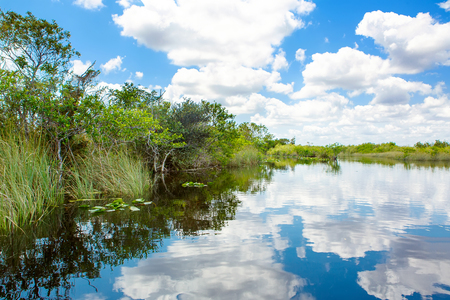 Florida wetland, Airboat ride at Everglades National Park in USA