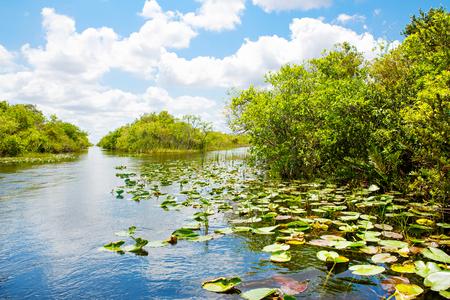 フロリダの湿地帯、エアボートに米国でエバーグレーズ国立公園で乗る。
