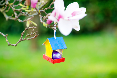 Closeup of colorful Easter egg in bird house on blooming magnolia tree