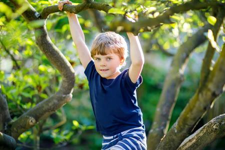 Little blond kid boy of 5 years climbing in tree in summer.