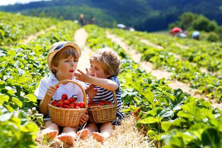 Two little sibling boys on strawberry farm in summer Foto de archivo