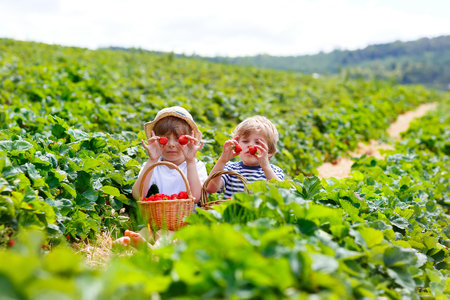 Two little sibling kids boys having fun on strawberry farm in summer. Stock Photo
