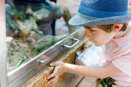 Little kid boy admire Poisonous green snake in terrarium