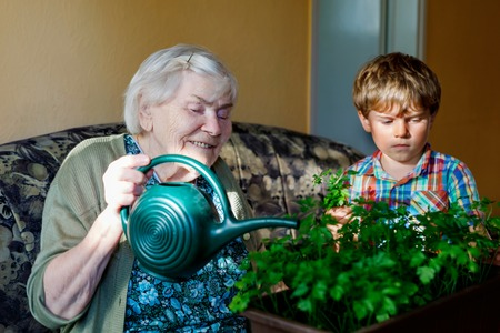 Active little preschool kid boy and grand grandmother watering parsley plants with water can at home Stok Fotoğraf