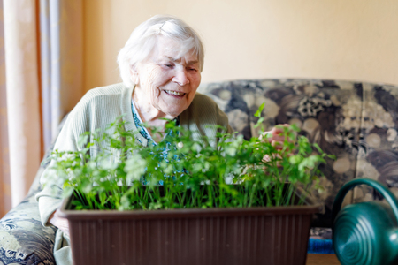 Senior woman of 90 years watering parsley plants with water can at home