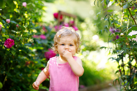 Portrait of little baby girl eating strawberry in garden. Cute child between blossoming roses. Happy healthy toddler Stock Photo