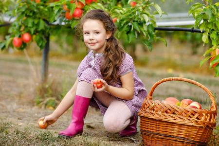 Porträt des kleinen Schulmädchens in bunten Kleidern und Gummistiefeln mit roten Äpfeln im Bio-Obstgarten. Entzückendes glückliches gesundes Babykind, das frische reife Früchte von den Bäumen pflückt und Spaß hat. Standard-Bild