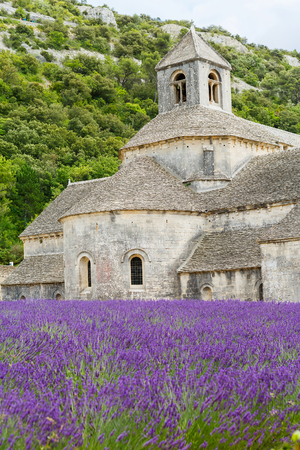 Abbey of Senanque and blooming rows lavender flowers