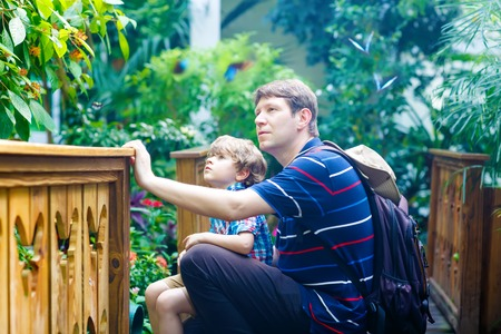 Father and preschool kid boy discovering flowers, plants and butterflies at botanic garden. 스톡 콘텐츠