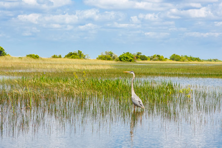 Zona umida della Florida, giro in idroscivolante nel Parco nazionale delle Everglades negli Stati Uniti. Archivio Fotografico