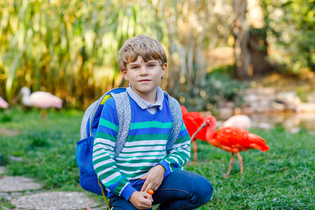 Little kid boy with backpack admire different birds like red and pink ibis in zoo park. Happy school child watching and observing animals and reptiles. Family leisure with kids or school trip Stock Photo