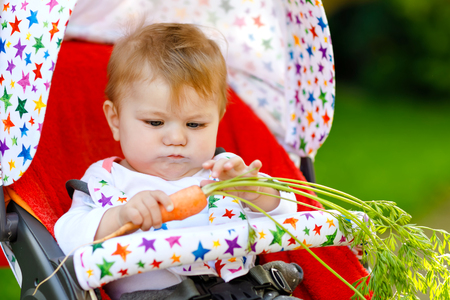 Cute adorable baby girl holding and eating fresh carrot. Beatuiful child having healthy snack. Baby girl sitting in pram or stroller. Little kid of 6 months outdoors, eating vegetables on summer day Reklamní fotografie