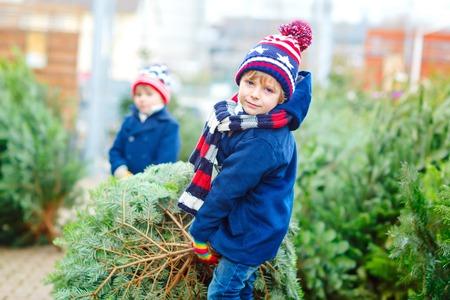 two little kid boys buying christmas tree in outdoor shop Reklamní fotografie