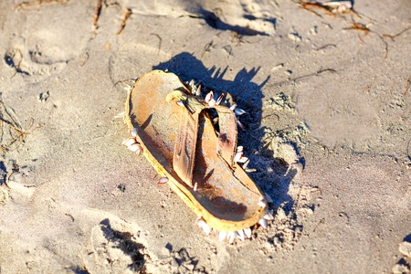 Seashells on shoe on a tropical seashore lying on the golden sand with a starfish under the hot summer sun with copyspace Stock Photo