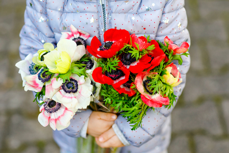 Closeup of little toddler lovely girl hands with red and white ranunculus flowers in spring garden. Close-up of baby holding fresh colorful bouquet as gift for mothers day for mum. Stock Photo