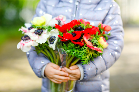 Closeup of little toddler lovely girl hands with red and white ranunculus flowers in spring garden. Close-up of baby holding fresh colorful bouquet as gift for mothers day for mum. Reklamní fotografie