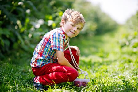 Cute little kid picking fresh berries on raspberry field. Child pick healthy food on organic farm. Little toddler boy play outdoors in fruit orchard. Preschooler gardening. Family having summer fun.