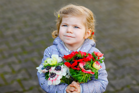 Little toddler lovely girl with red and white ranunculus flowers in spring garden. Happy cute baby holding fresh colorful bouquet as gift for mothers day for mum.