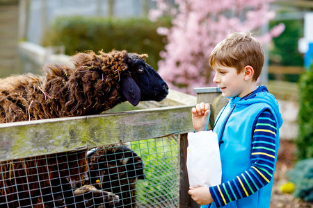 Little school kid boy feeding little goats and sheeps on a kids farm. Beautiful happy healthy child petting animals in the zoo. Excited and happy boy on family weekend.