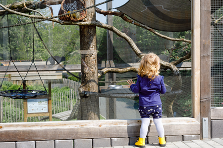 Cute adorable toddler girl watching funny monkeys on weedend or day trip to a zoo. Baby child observing wild animals at wildlife safari park. Active family leisure with kids