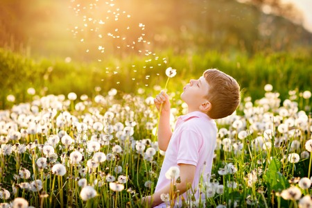 Adorable cute school boy blowing on a dandelion flower on the nature in the summer. Happy healthy beautiful child with blowball, having fun. Bright sunset light, active kid.