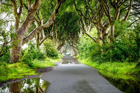 Spectacular Dark Hedges in County Antrim, Northern Ireland on cloudy foggy day. Avenue of beech trees along Bregagh Road between Armoy and Stranocum. Empty road without tourists Stock fotó