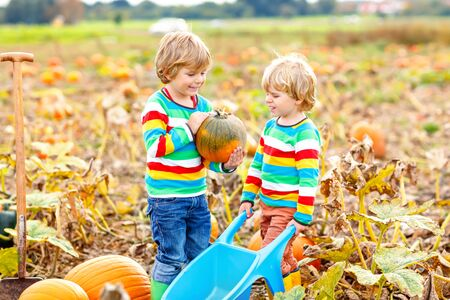 Two little kids boys picking pumpkins on Halloween pumpkin patch. Children playing in field of squash. Kids pick ripe vegetables on a farm in Thanksgiving holiday season. Family having fun in autumn 版權商用圖片