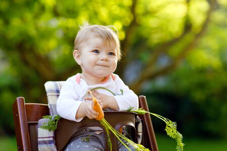 Cute adorable baby girl holding and eating fresh carrot. Beatuiful child having healthy snack. Baby girl sitting in high chair. Little kid of 6 months outdoors, eating vegetables on summer day