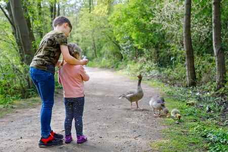 Two siblings kids, Cute little toddler girl and school boy feeding wild geese family in a forest park. Happy children having fun with observing birds and nature