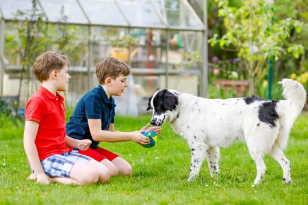 Two kids boys playing with family dog in garden. Laughing children, adorable siblings having fun with dog, with running and playing with ball. Happy family outdoors. Friendship between animal and kids