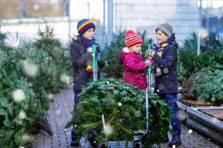 three little siblings: toddler girl and two kids boys holding Christmas tree on market. Happy children in winter clothes choosing and buying tree in outdoor shop. Family, tradition, celebration