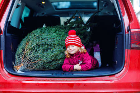 Adorable little toddler girl with Christmas tree inside of family car. Happy healthy baby child in winter fashion clothes choosing and buying big Xmas tree for traditional celebration. Banco de Imagens