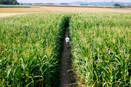 Happy kid boy playing on corn labyrinth field on organic farm, outdoors. Funny child hild having fun with running, farming and gardening of vegetable. Active family leisure in summer. Stock Photo