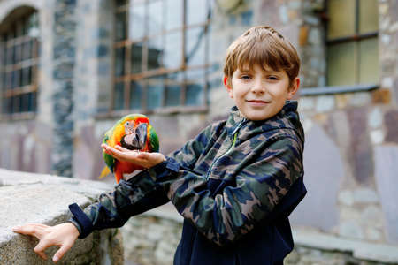 Gorgeous school kid boy feeding parrots in zoological garden. Child playing and feed trusting friendly birds in zoo and wildlife park. Children learning about wildlife and parrot. Imagens
