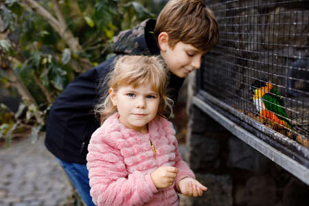 Two happy children, siblings feeding parrots in zoological garden. Toddler girl and kid boy playing and feed trusting friendly birds in wildlife park. Brother and sister learning about parrot.