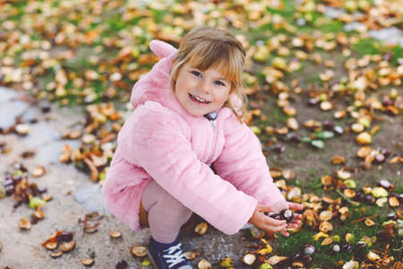 Adorable cute toddler girl picking chestnuts in a park on autumn day. Happy child having fun with searching chestnut and foliage. Autumnal activities with children.