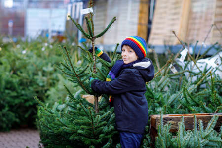 Adorable little smiling kid boy holding Christmas tree on market. Happy healthy child in winter fashion clothes choosing and buying big Xmas tree in outdoor shop. Family, tradition, celebration.