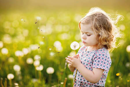 Adorable cute little baby girl blowing on a dandelion flower on the nature in the summer. Happy healthy beautiful toddler child with blowball, having fun. Bright sunset light, active kid. Standard-Bild